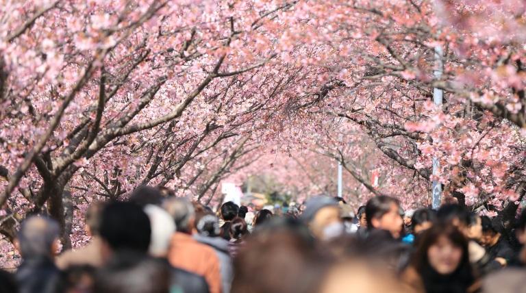Bloemenboom met mensen